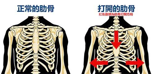 位置 肋骨 骨骨格系